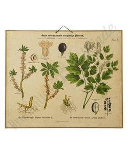 Botanische schoolplaat - Voornaamste giftige planten