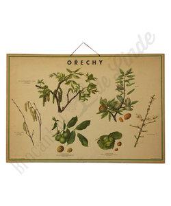 Botanische schoolplaat - Noten