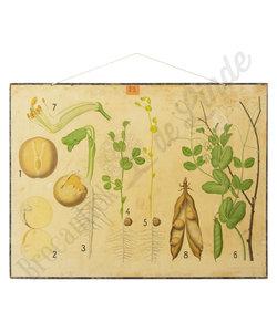 Botanische schoolplaat - Eug warming planten