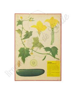 Botanische schoolplaat - Komkommer
