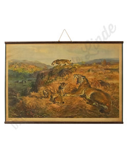 Zoölogische schoolplaat - Leeuwen troep