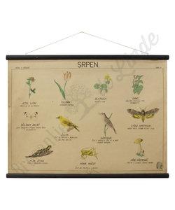 Botanische schoolplaat - Augustus