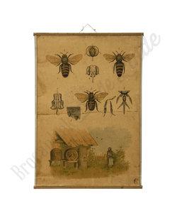 Zoölogische schoolplaat - Bijen