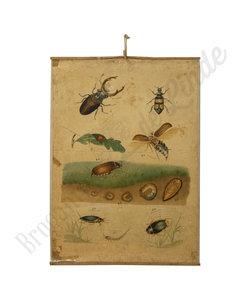 Zoölogische schoolplaat - Insecten