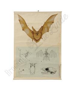 Zoölogische schoolplaat - Vleermuis