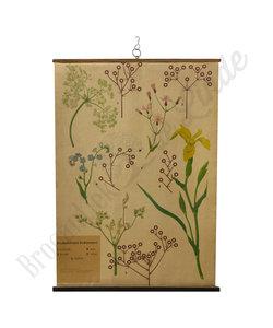 Botanische schoolplaat - Bloeiwijze