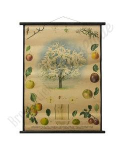 Botanische schoolplaat - Appelboom