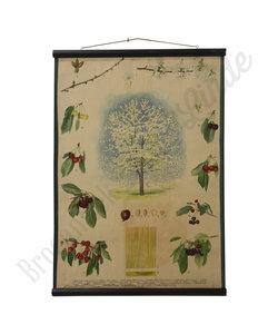 Botanische schoolplaat - Kersenboom