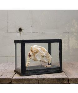 Opgezet skelet 'Konijn'