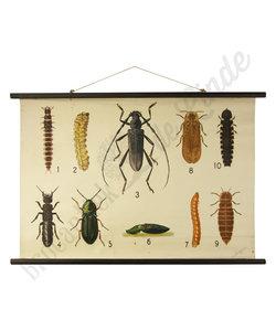 Zoölogische schoolplaat 'Insecten'