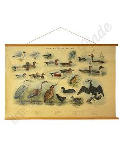 Zoölogische schoolplaat 'Riet- en watervogels'