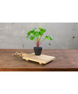 Dienblad - Blank hout