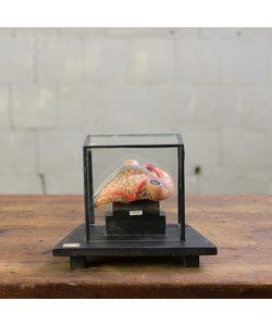 Anatomisch model hart No. 6