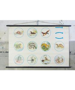 Schoolplaat - Dieren langs de waterkant