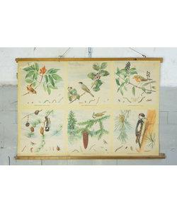 Zoölogische schoolplaat - Vogels en voedsel