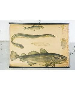 Zoölogische schoolplaat - Vissoorten