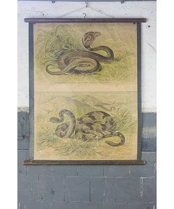 Zoölogische schoolplaat - Cobra en Ratelslang