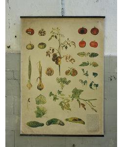 Botanische schoolplaat - Plantaardige ziekten ''No 7''