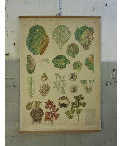 Botanische schoolplaat - Plantaardige ziekten ''No 8''