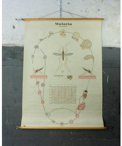 Zoölogische schoolplaat - Malaria