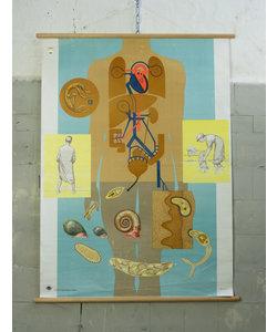 Anatomische schoolplaat - Arbeid