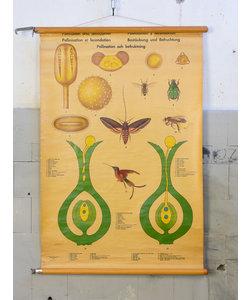 Botanische schoolplaat - Bestuiving en bevruchting No. 2