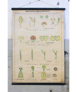Botanische schoolplaat - Plantorganen