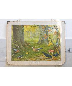 Zoölogische schoolplaat 'Boschvogels'