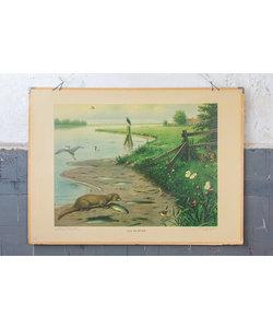 Zoölogische schoolplaat 'Aan de rivier'