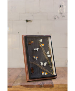 Vlinderlijst No. 57
