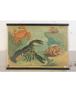 Vintage schoolplaat - Kreeftachtigen
