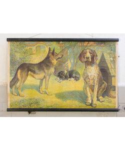 Vintage schoolplaat - Honden