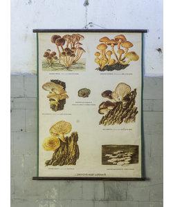 Botanische schoolplaat - Hout schimmels