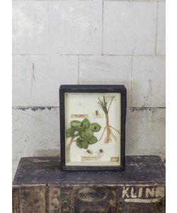 Vitrinelijst - Insectenplagen in veldboerderij