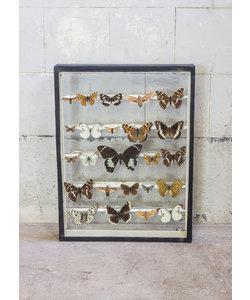 Vlinderlijst - Dubbel glas
