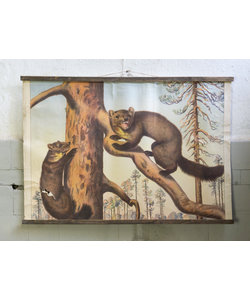 Zoologische schoolplaat - Marter