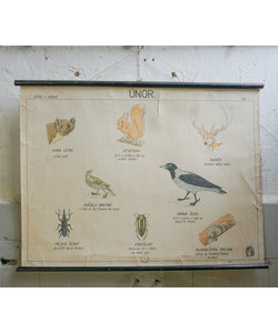 Zoologische schoolplaat - Maanden in de natuur