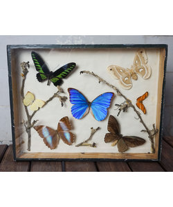 Vlinderlijst - 7 grote vlinders