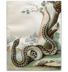 J. van Lier -  Verhandeling over de Slangen en Adders - 1781