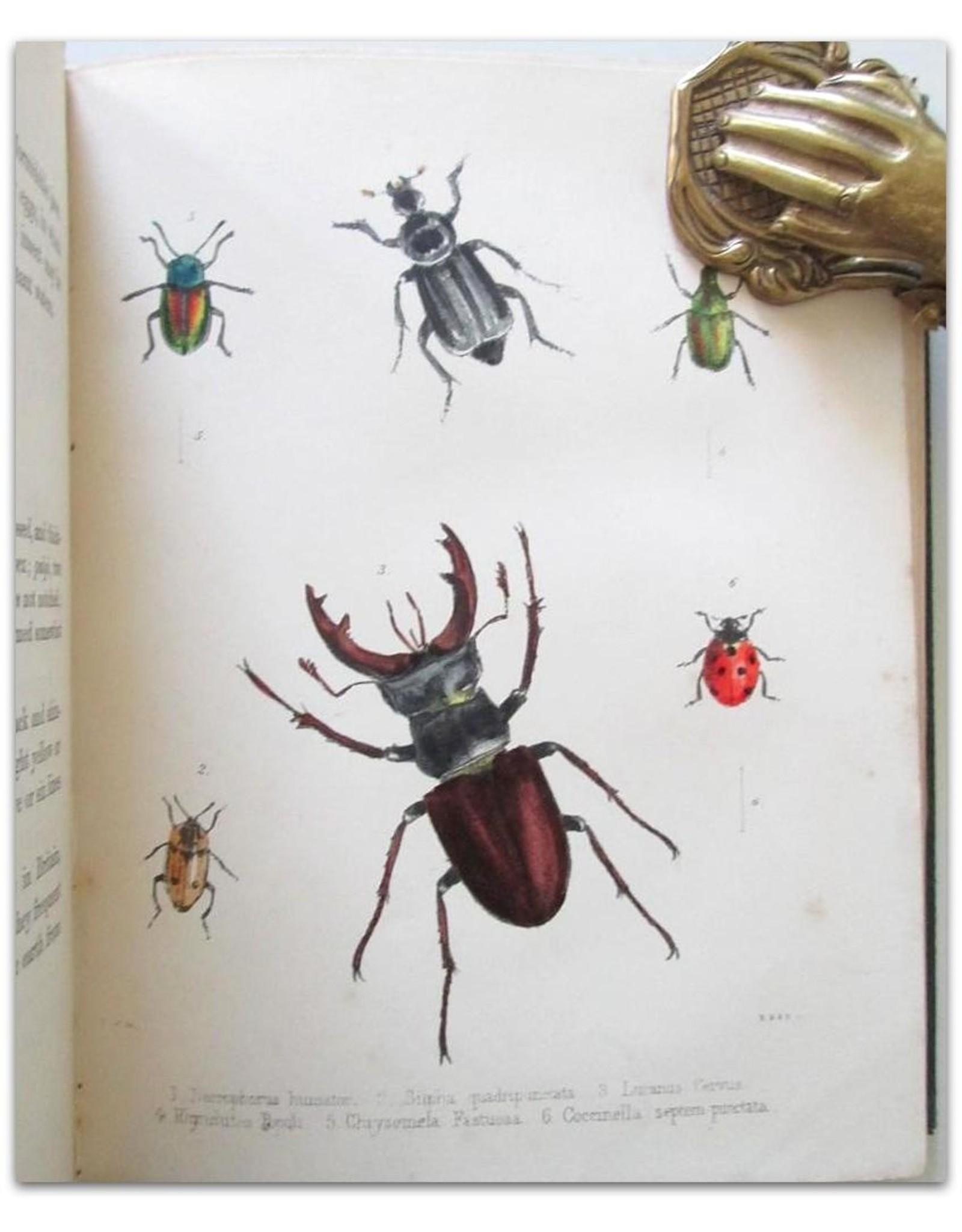 Maria E. Catlow - Popular British Entomology