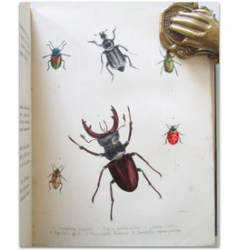 Maria E. Catlow - Popular British Entomology - 1852