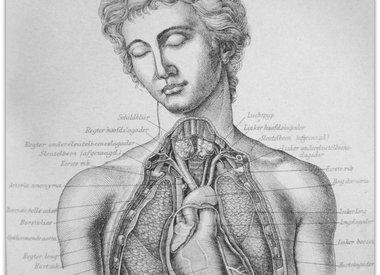 Medisch & Anatomie
