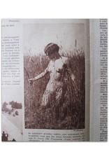 Voila - L'hebdomadaire du reportage No 113