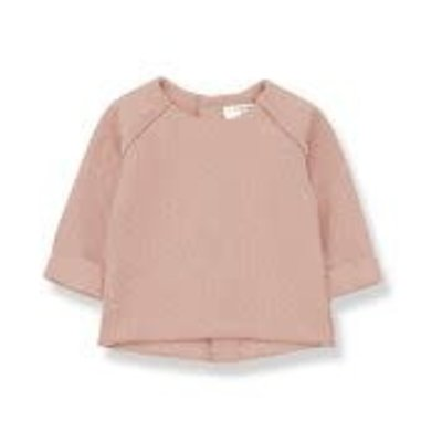 1+ in the family Sweater farerra Rose