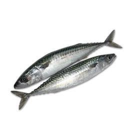 Mackerel 2-3 Pack