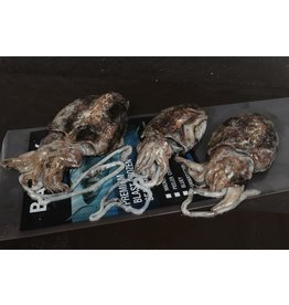 Cuttlefish 2-3 Pack
