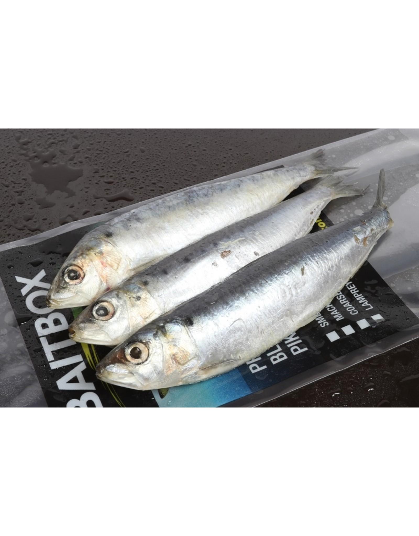 Sardines 3/4 Pack