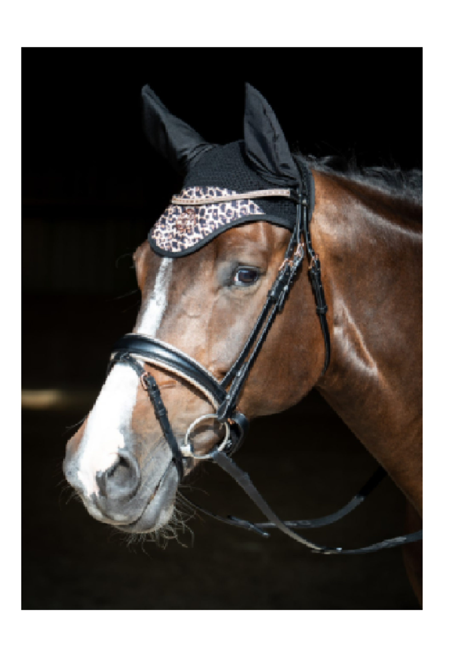 Harry's horse Harry Cats Kapje