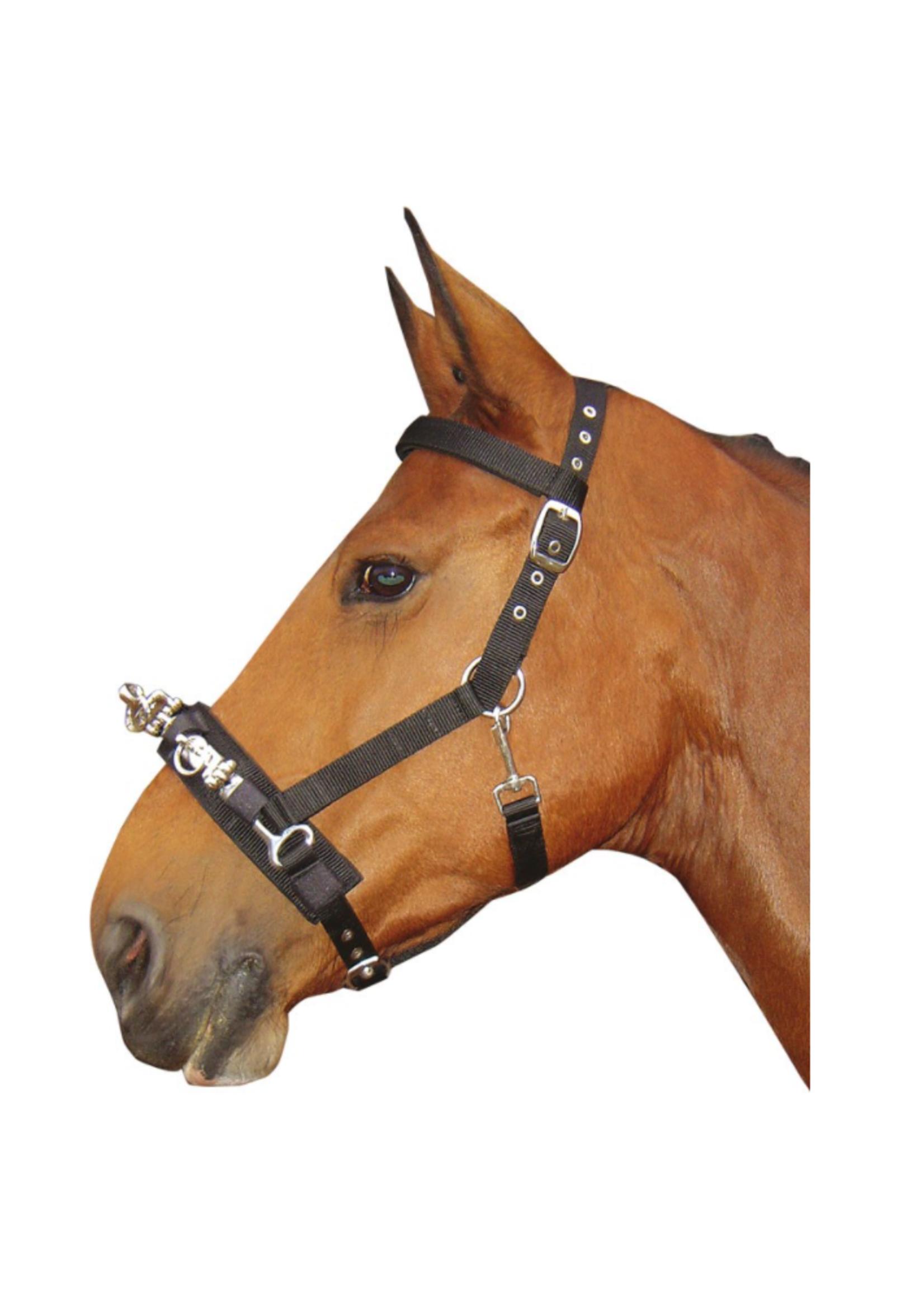 Harry's horse Harry Longeer Kaptoom