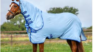 Help! Mijn paard heeft zomereczeem!